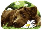 Knüpfteppich Labrador